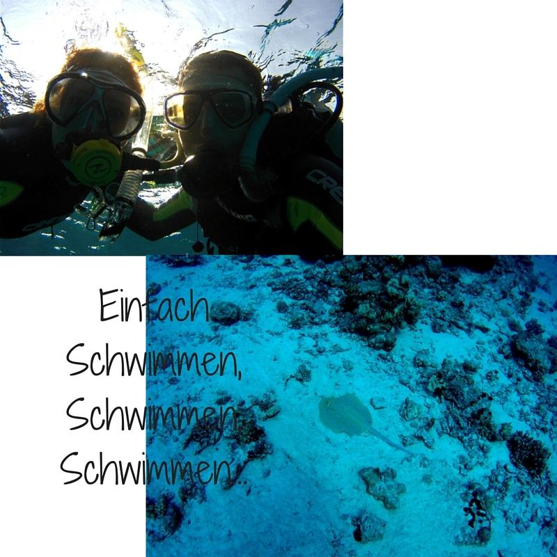 Einfach SchwimmenSchwimmenSchwimmen