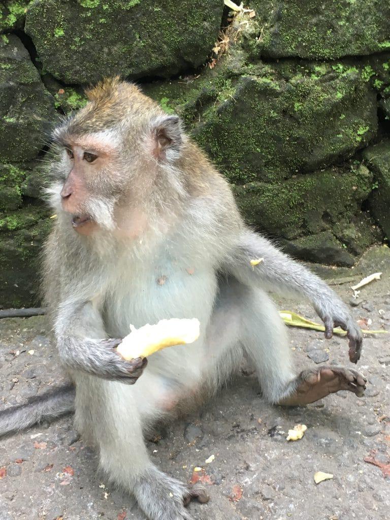 der perfekte bali trip monkey forest