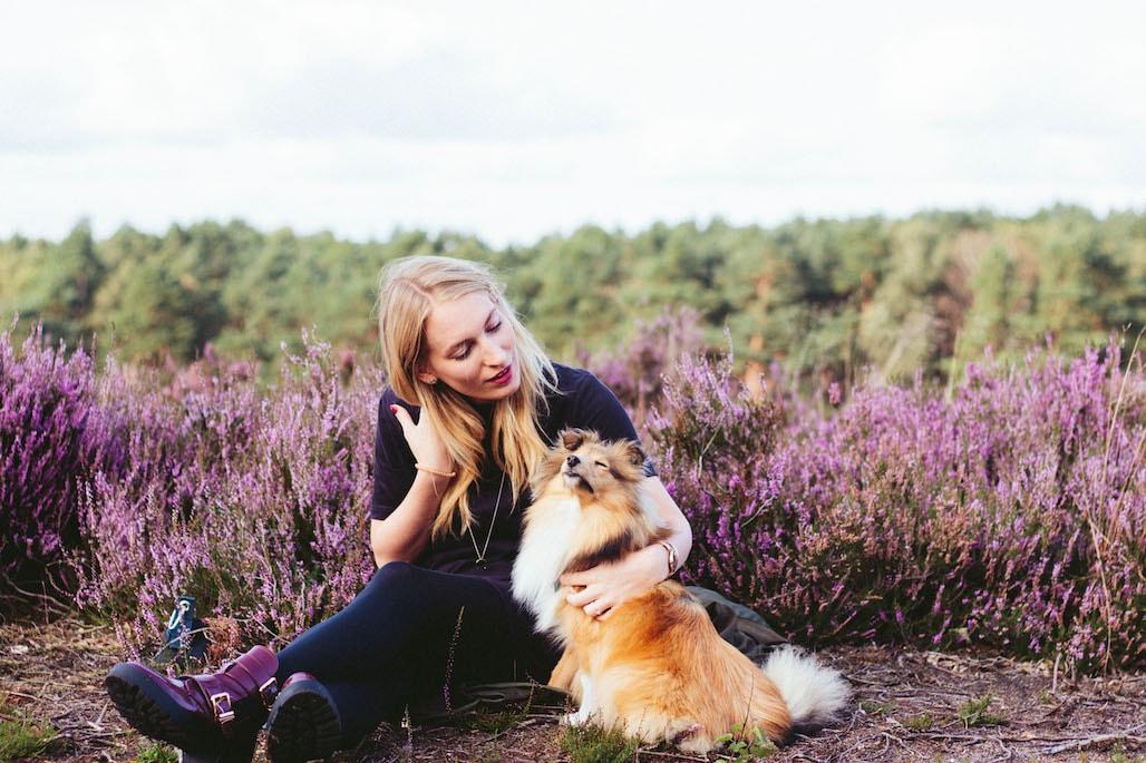 ausflug in die lueneburger heide zur heidebluete mit hund title