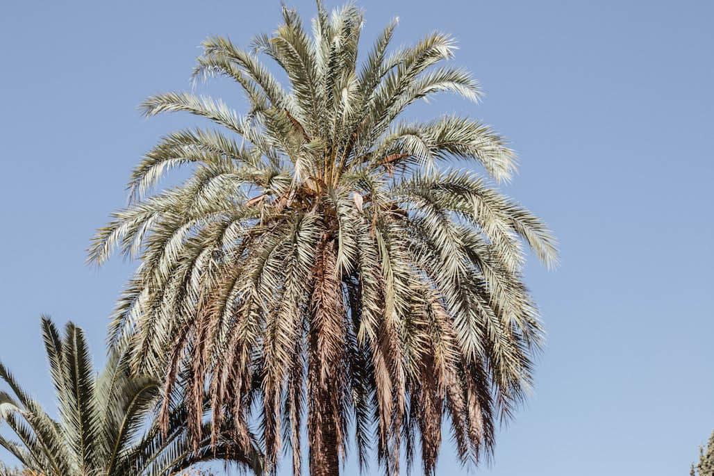mallorca travel guide 2017 palma palme