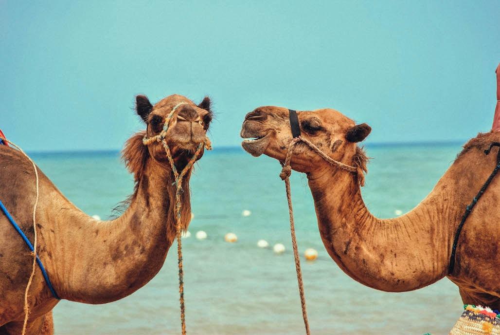 herbst ägypten hurghada el gouna