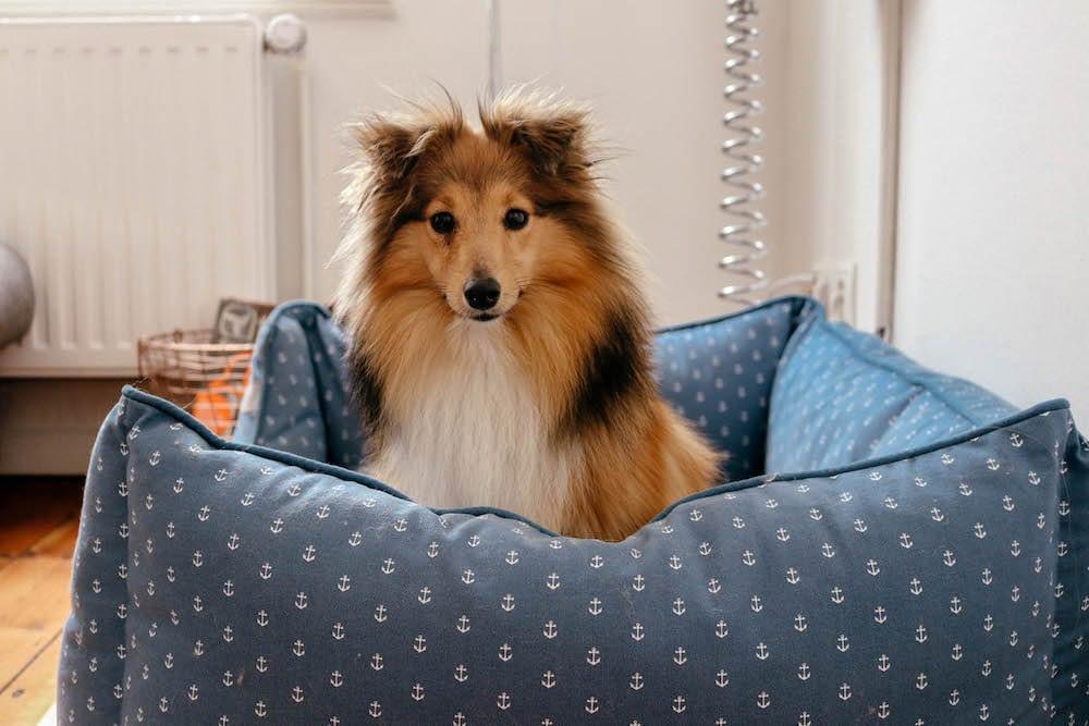 hamburg city dog mit hund in der gro stadt comfort zone. Black Bedroom Furniture Sets. Home Design Ideas