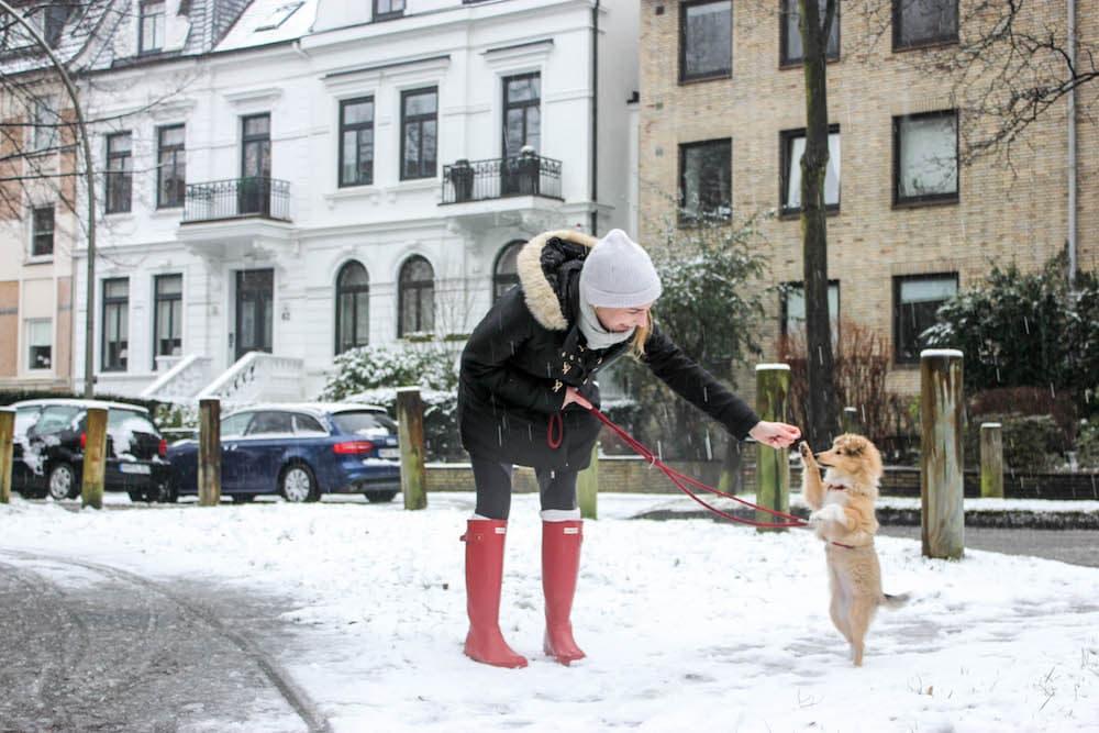 Hund in der Großstadt Training