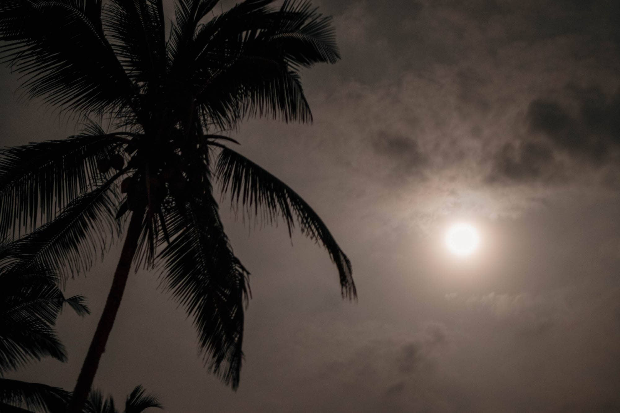 Vollmond, Poya Day in Sri Lanka Mond mit Palme