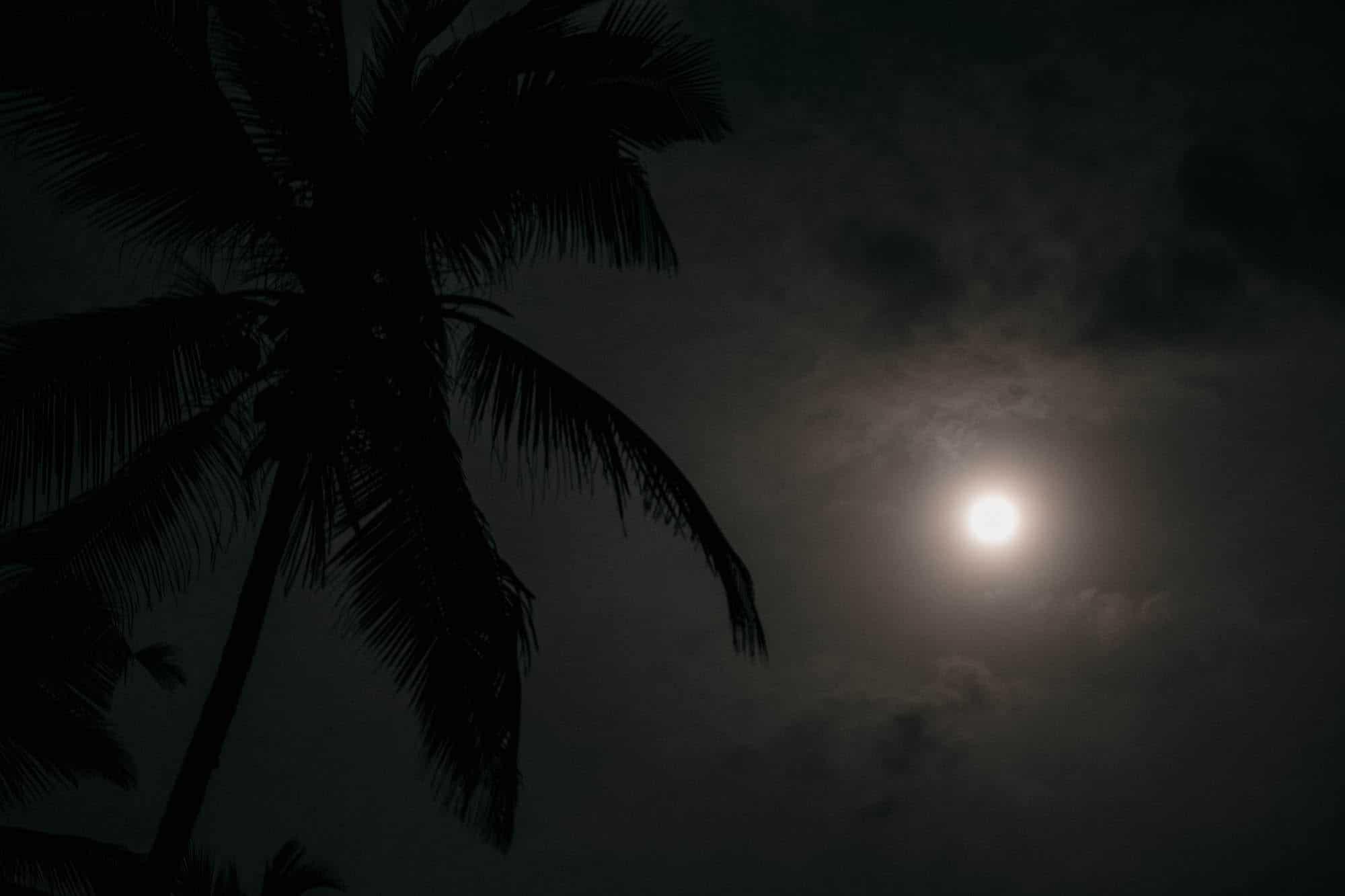 Poya Day Vollmond mit Palme in Ranna, Sri Lanka