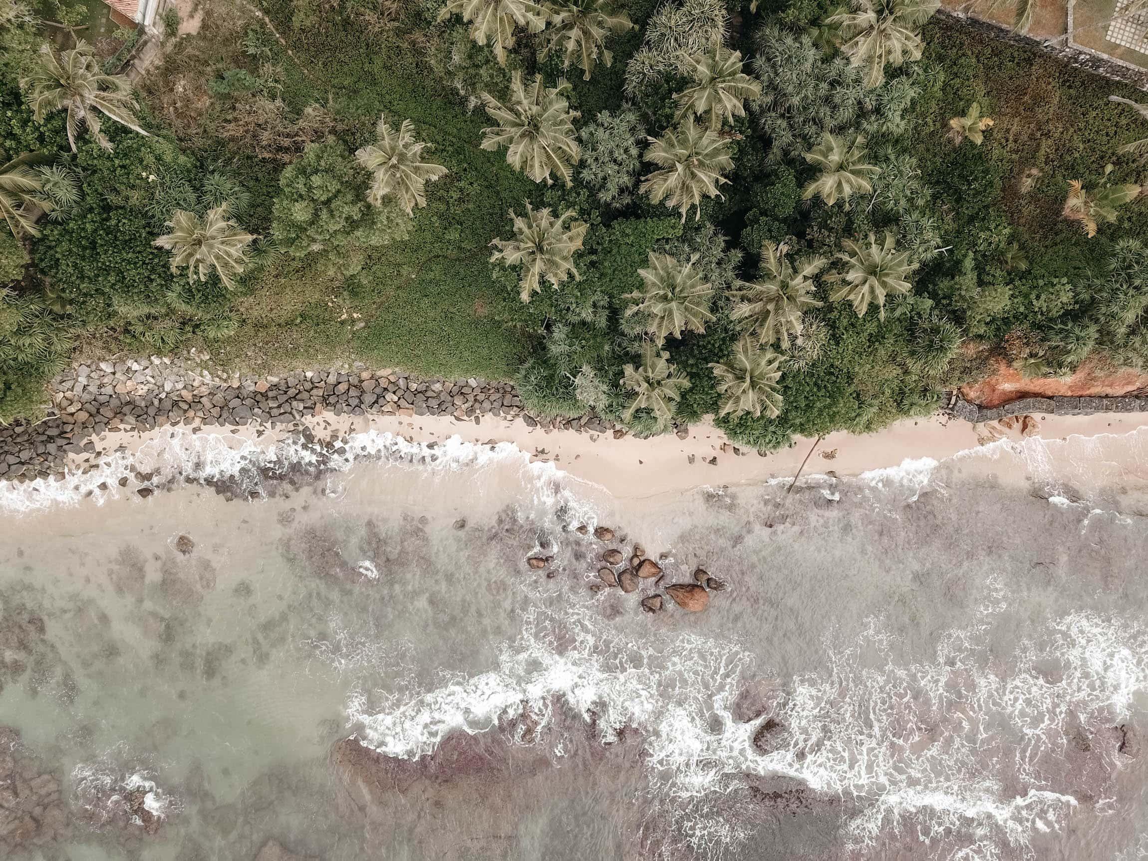 Fotografieren und filmen mit der Drohne palmen von oben