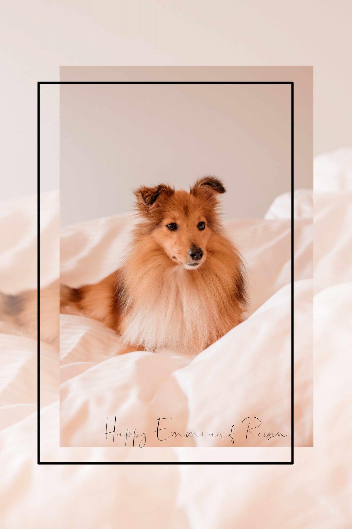reisen mit hund im hotel
