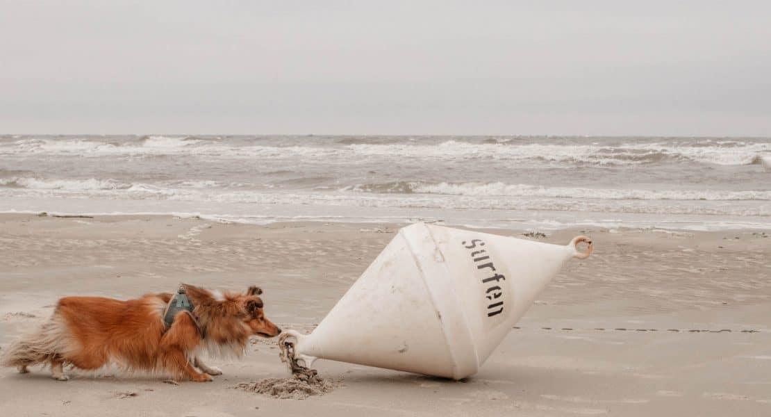 reisen mit hund: 8 tipps strandurlaub