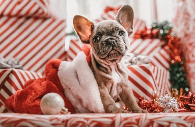 weihnachtsgeschenkideen fuer hundehalter