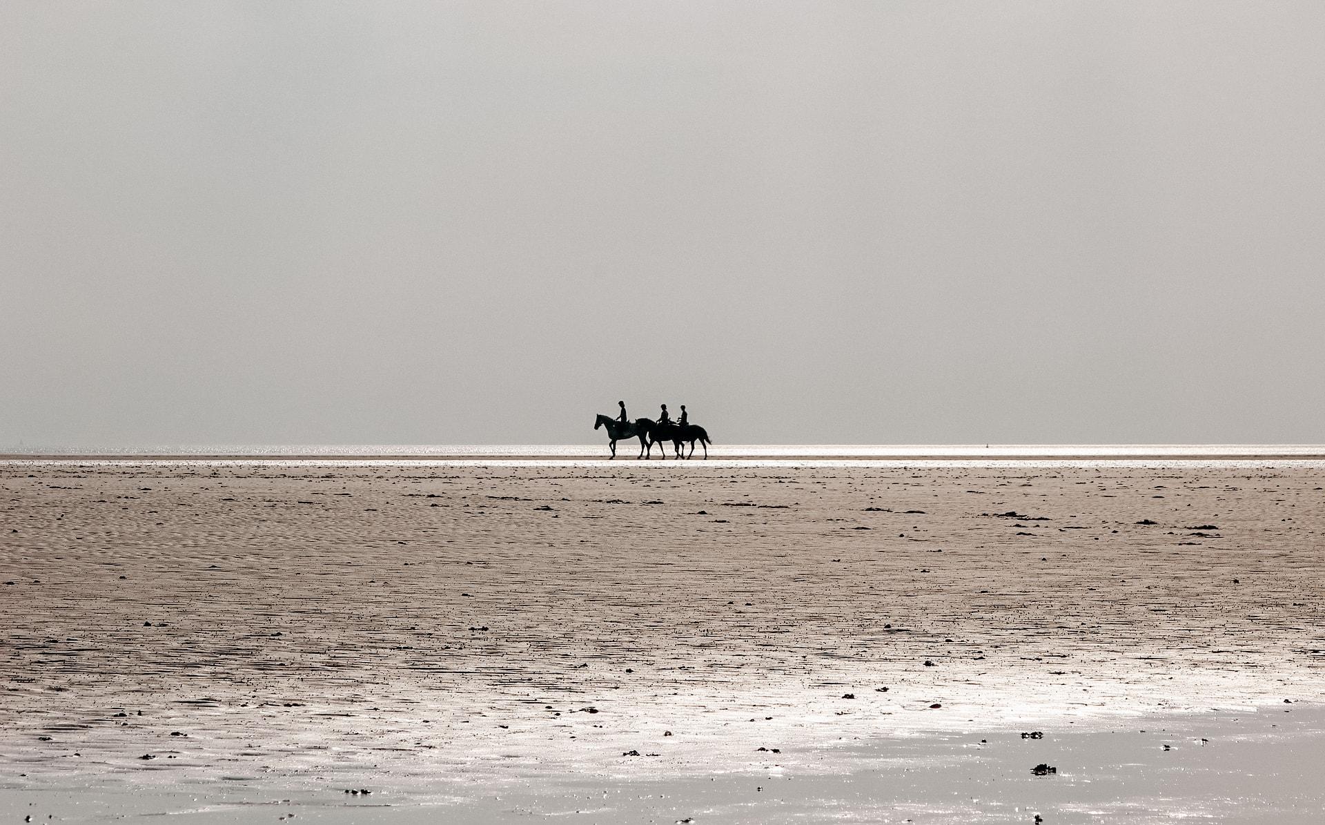 pferde mit reitern am strand von st. peter ording