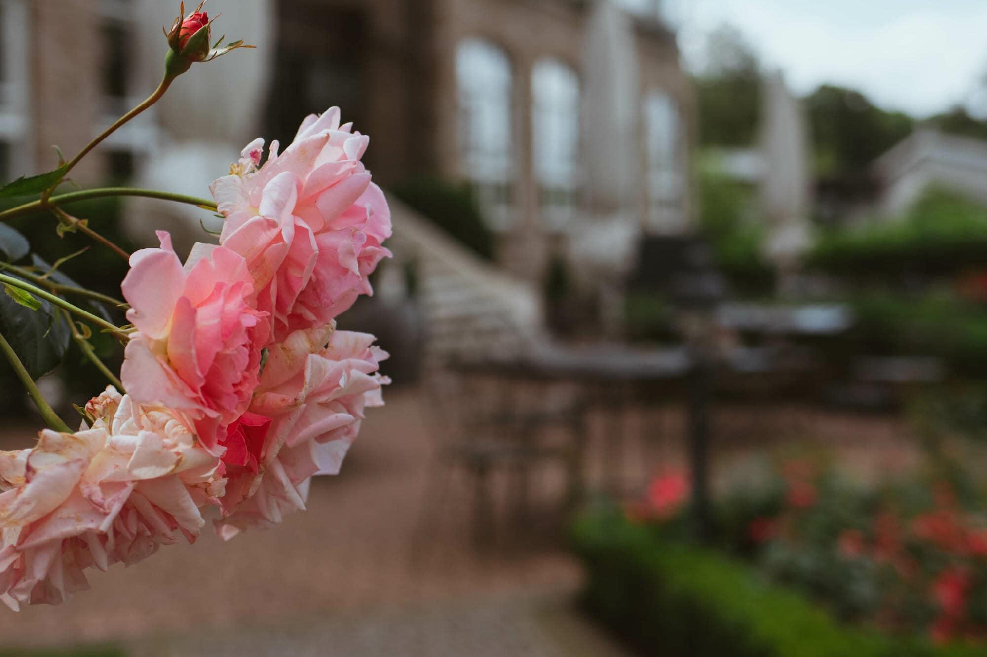vitalhotel alter meierhof rosen