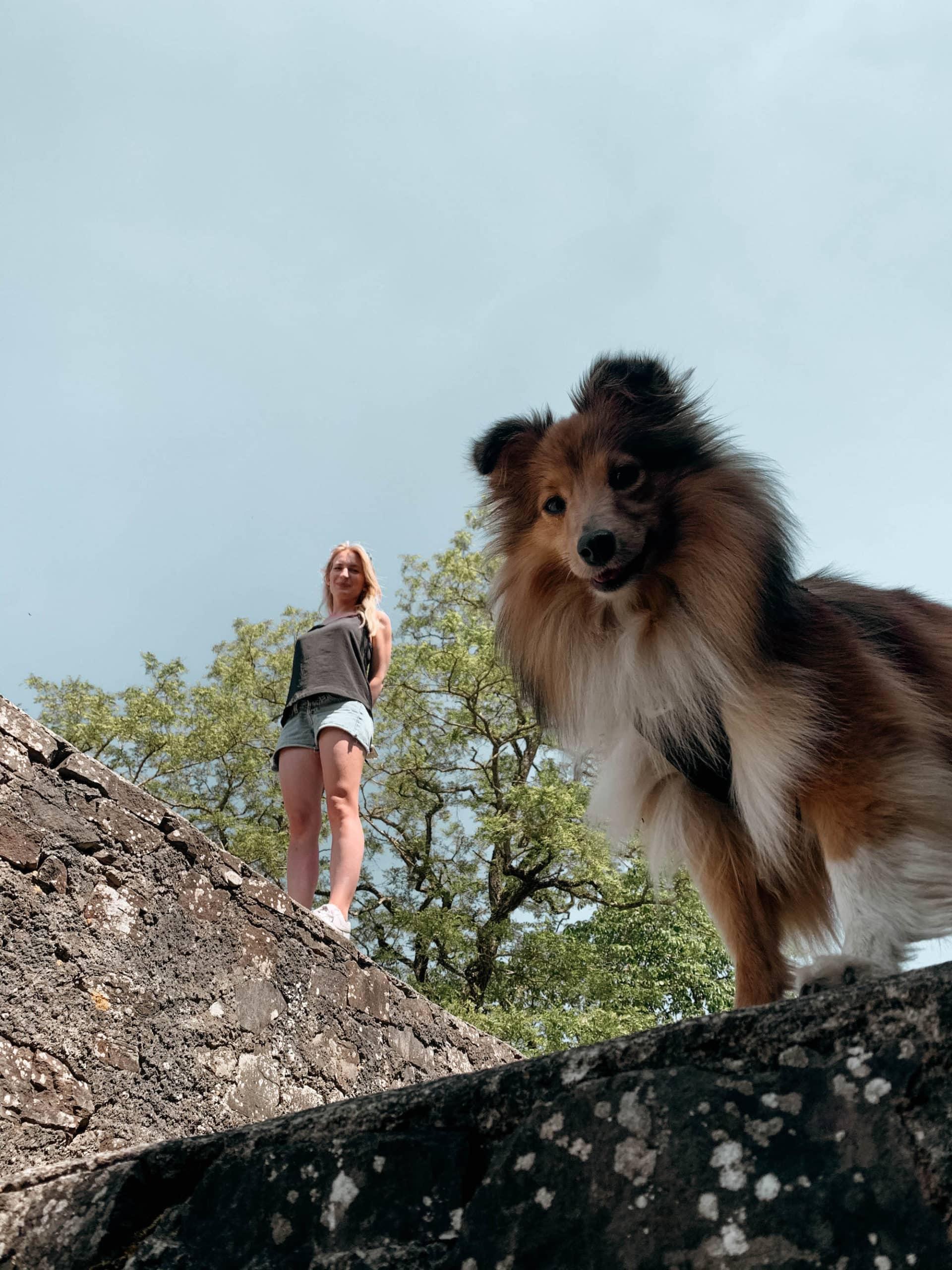 Eifel Highlights mit Hund