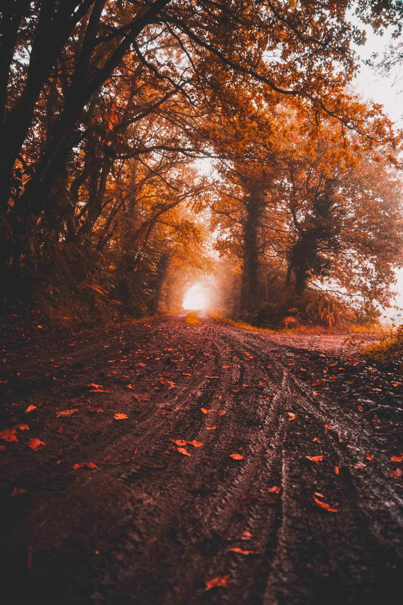 tipps gegen herbstblues licht