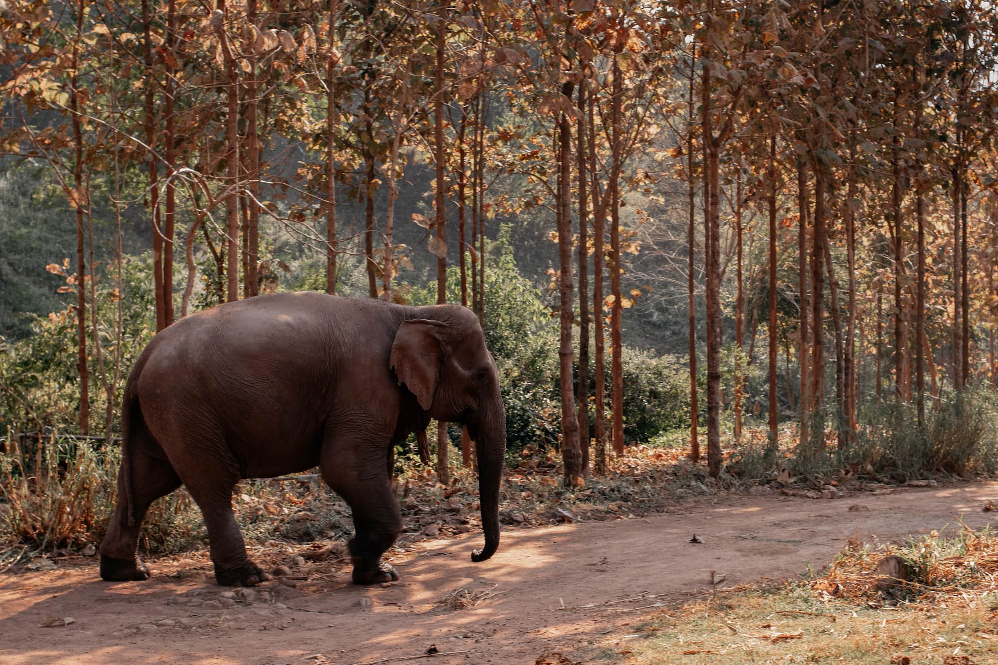 elefant wildnis