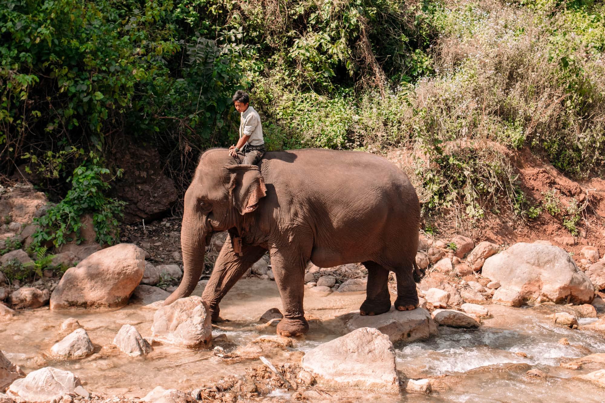 elefanten reiten myanmar