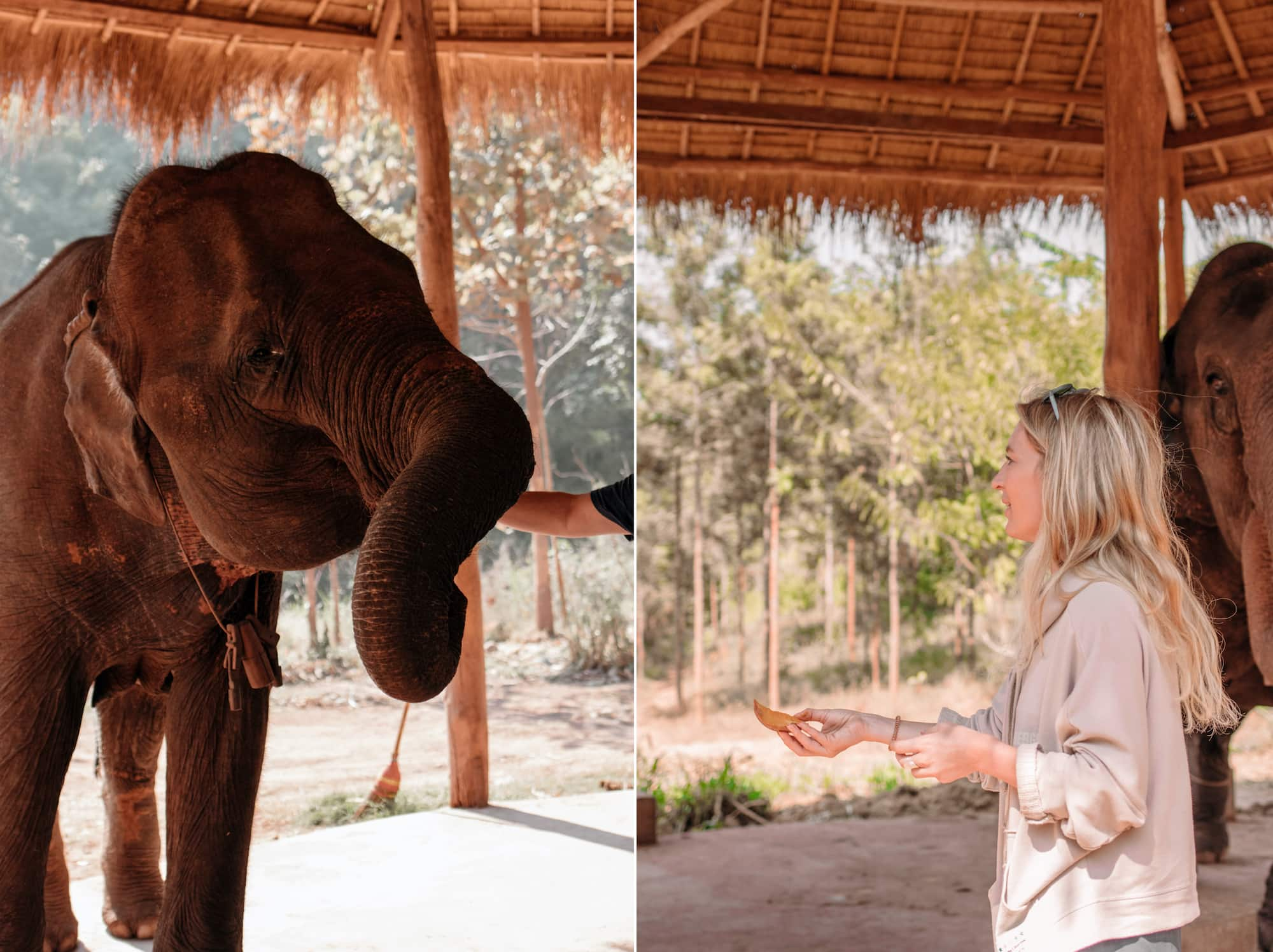 elefanten füttern myanmar