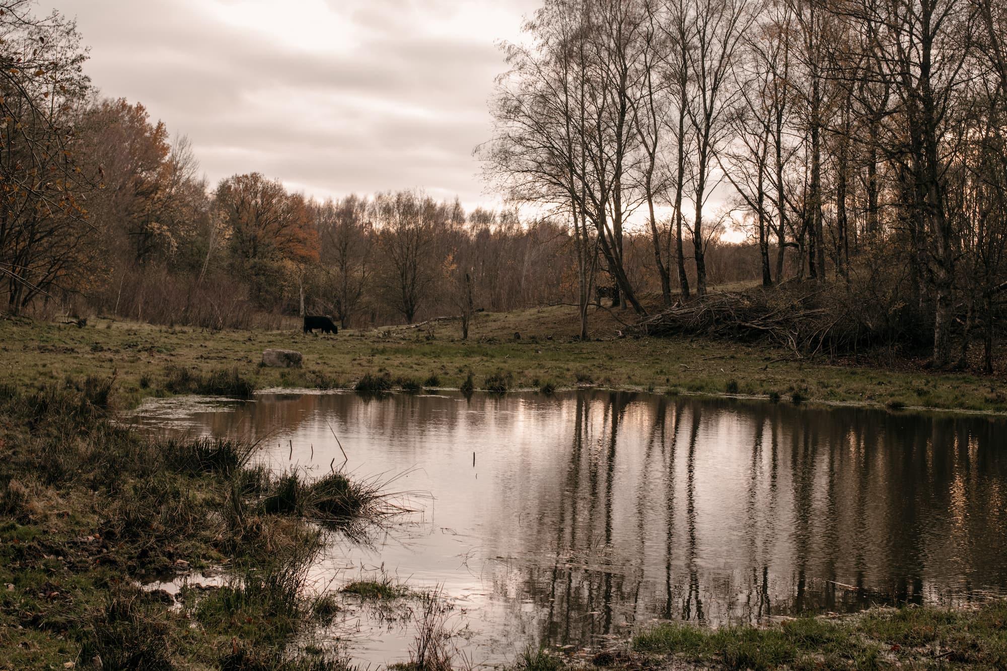 naturschutzgebiet hamburg