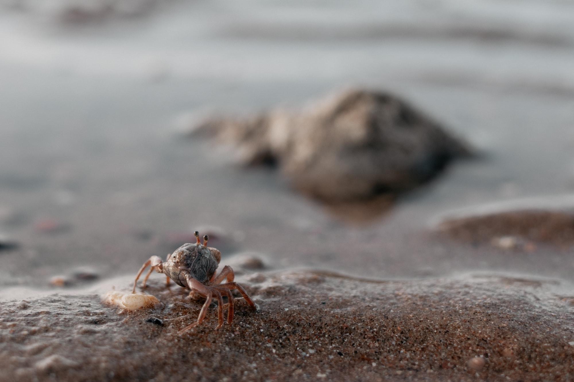 krabi krebs strand