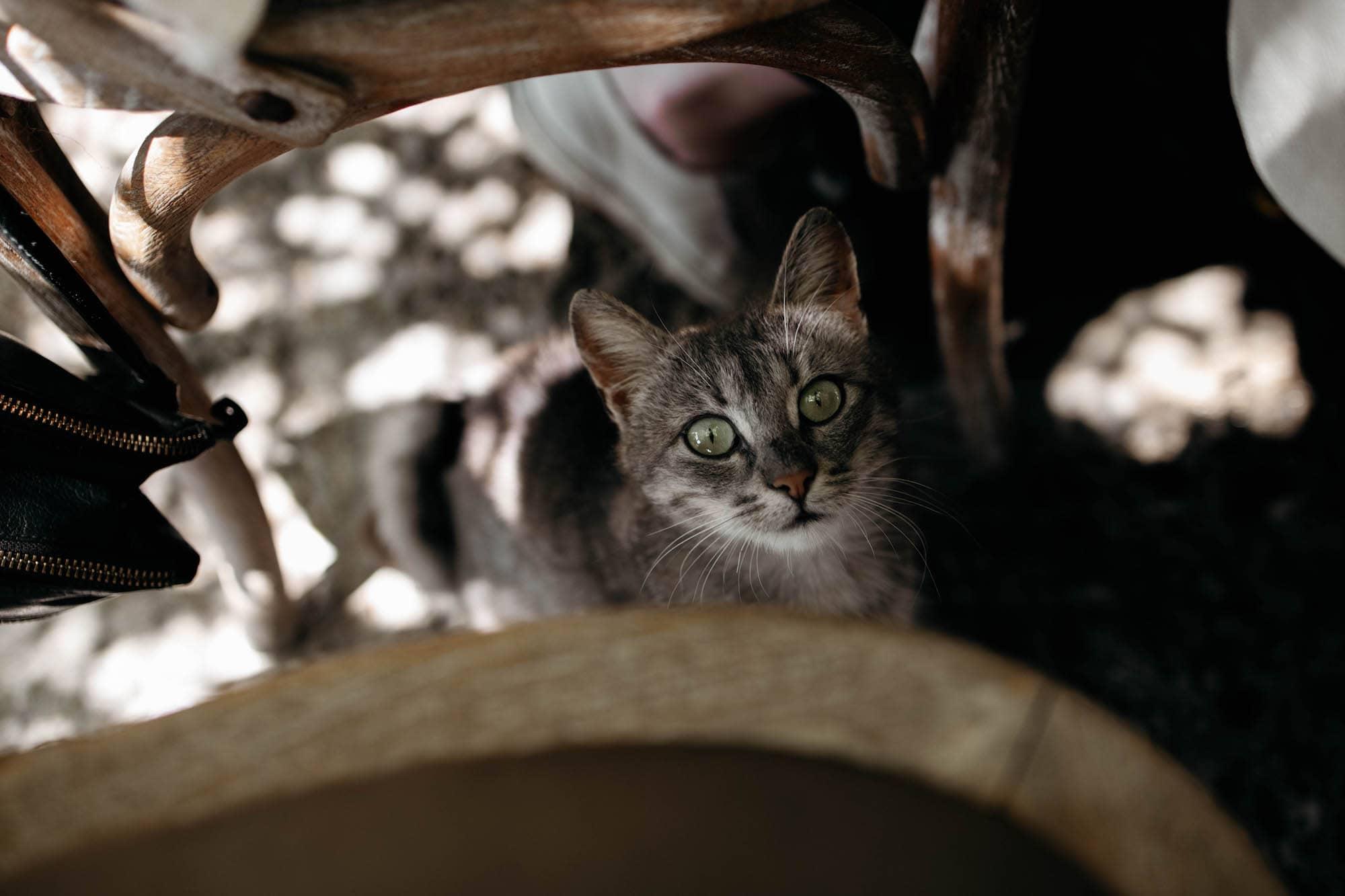 Katze Bulgarien Schwarzmeerküste