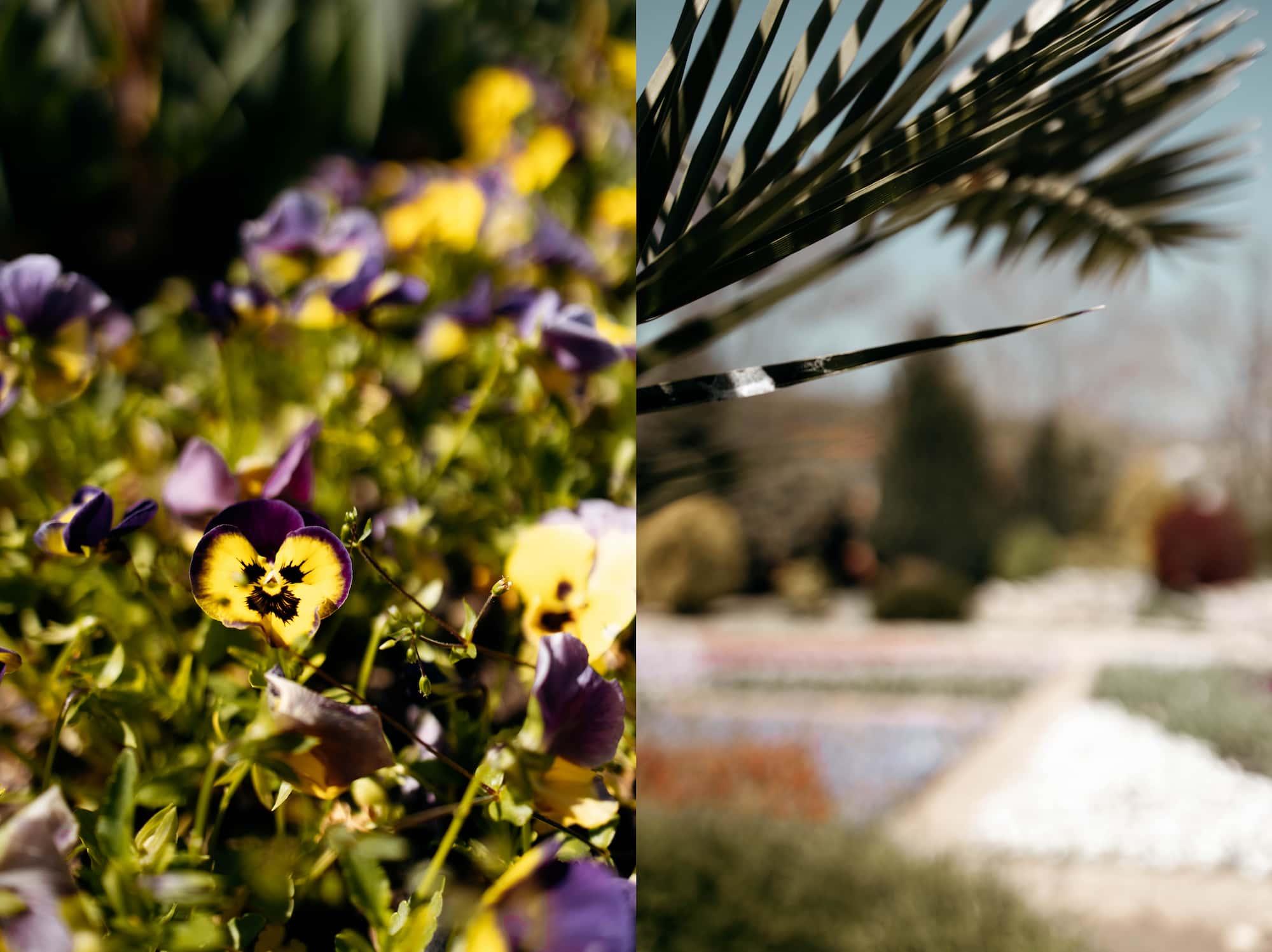 Botanical Garden Baltschik Bulgarien