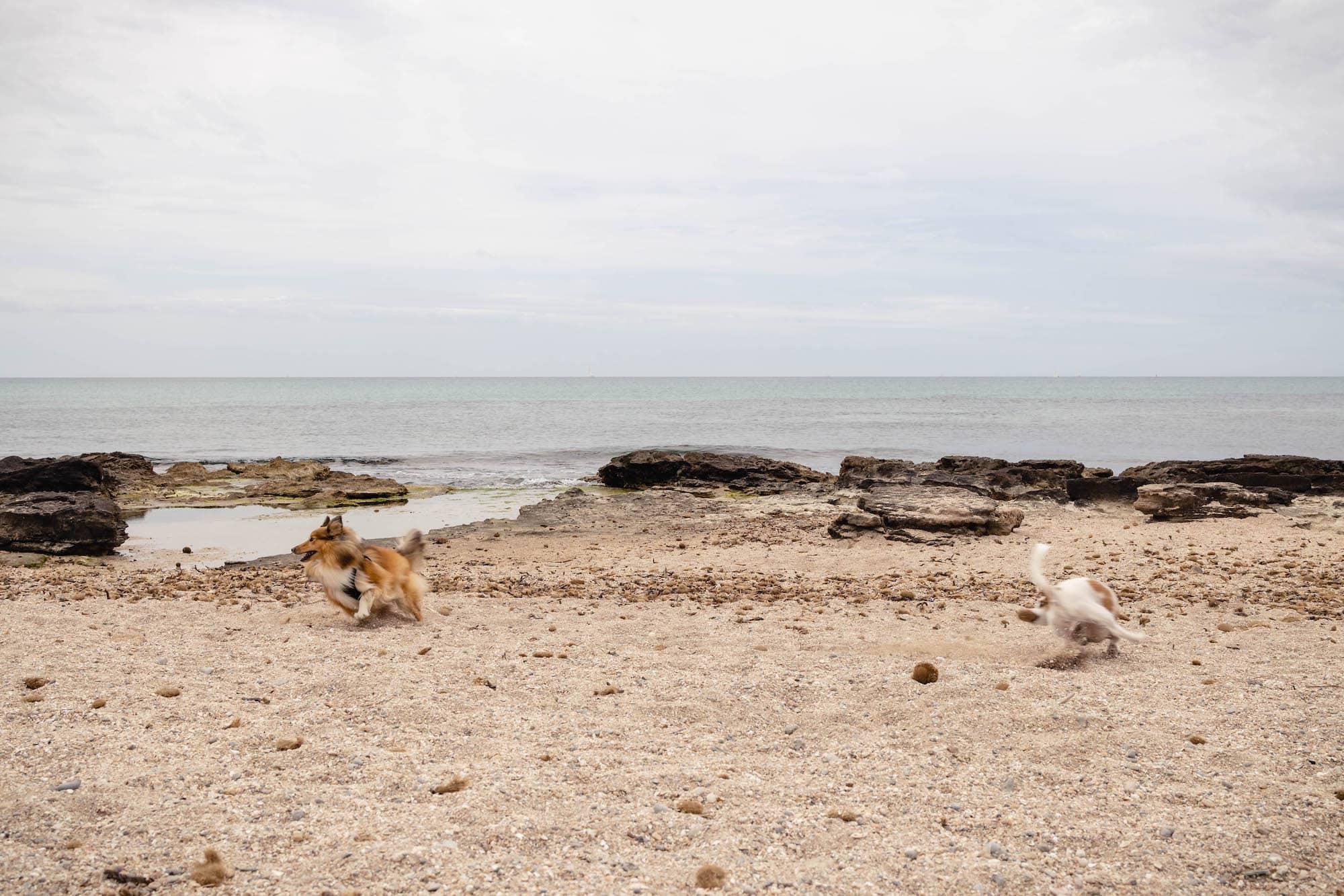 mallorca mit hund strand