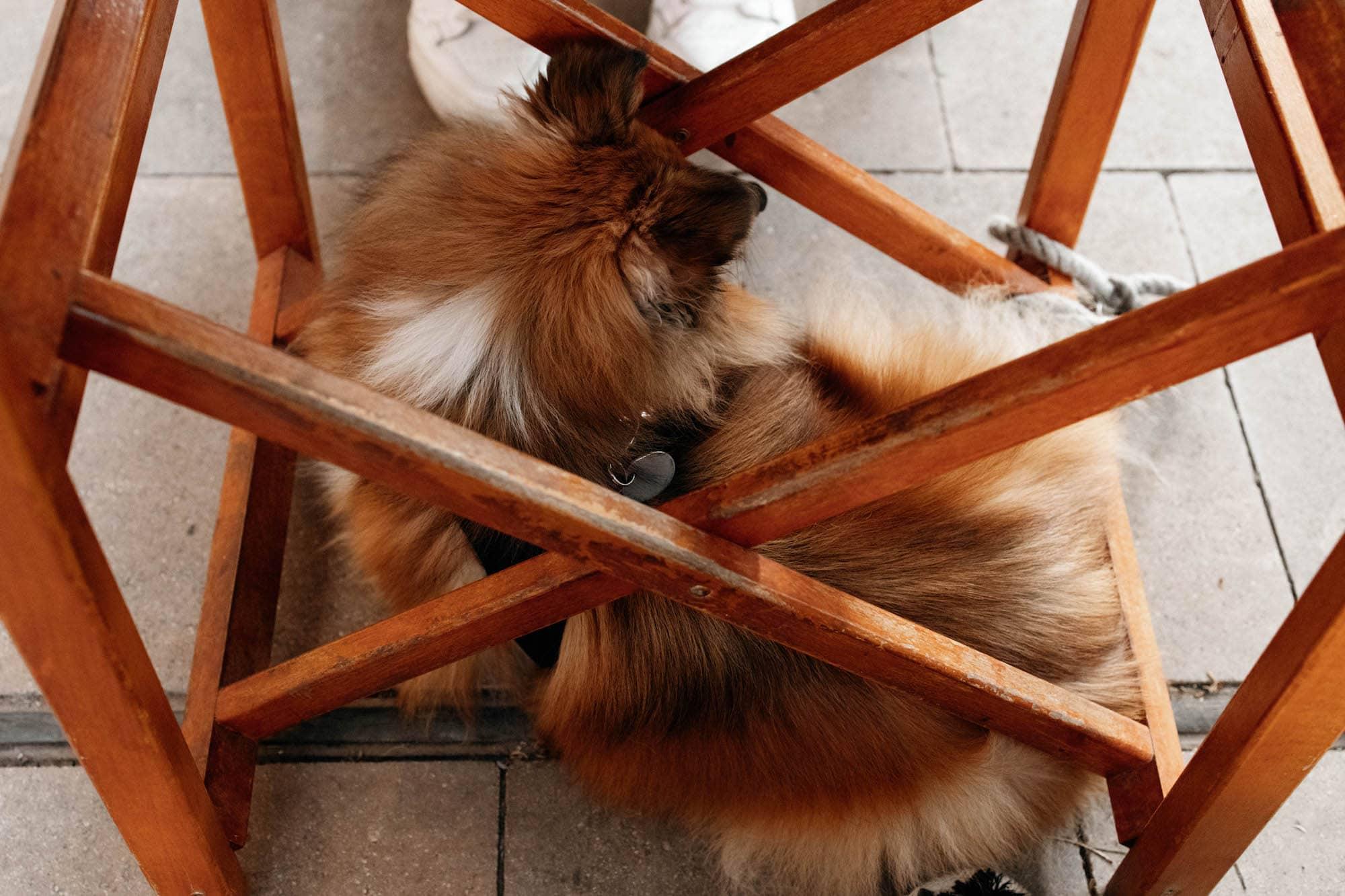 mallorca restaurant hund