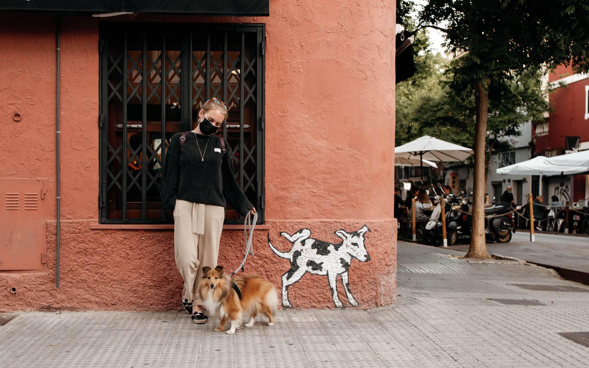 palma mallorca mit hund