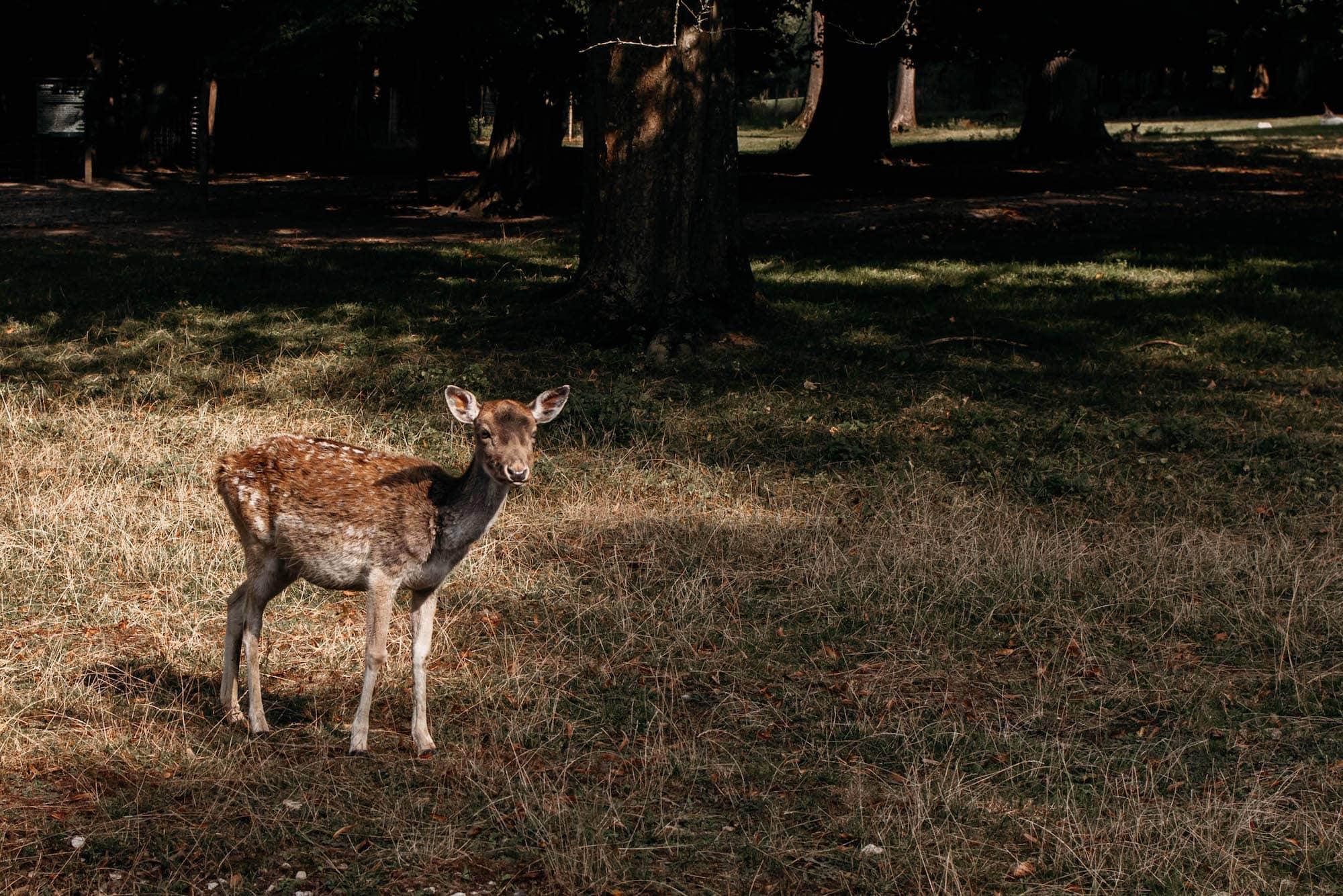 gräflicher park bad driburg wildpark